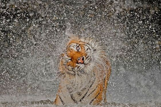 © Ashley Vincent / National Geographic Photo Contest