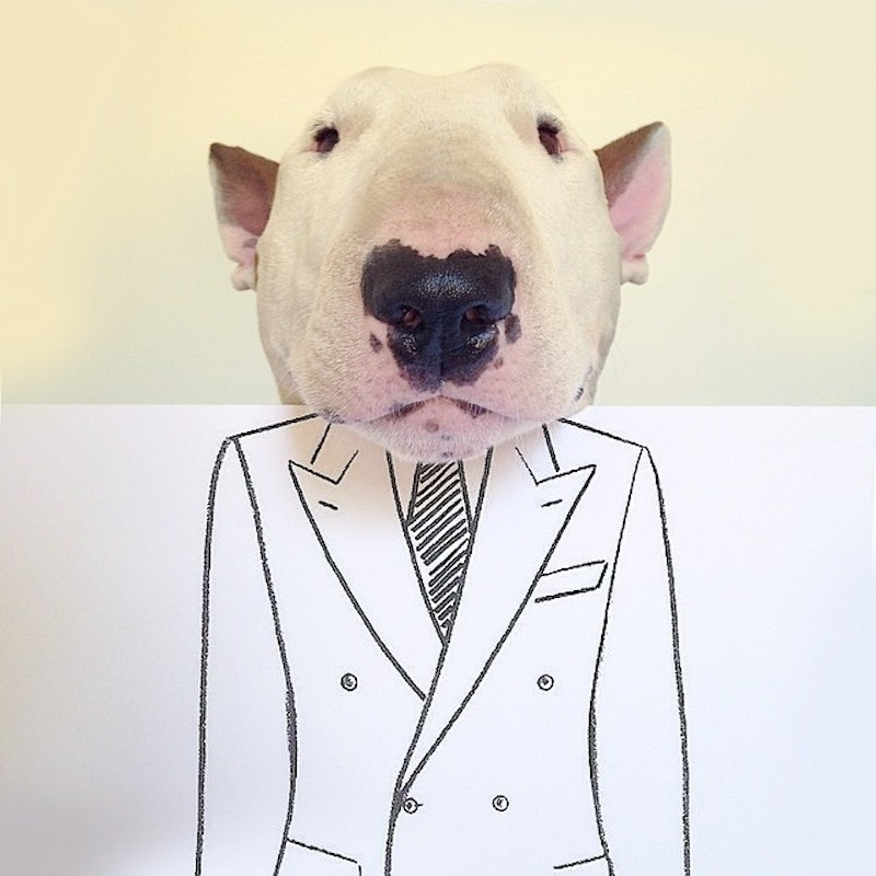 Rafael Mantesso - bull terrier - businessman