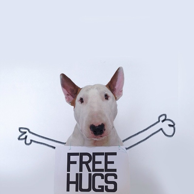 Rafael Mantesso - bull terrier - free hugs!